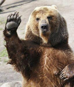 Salut du Bear.
